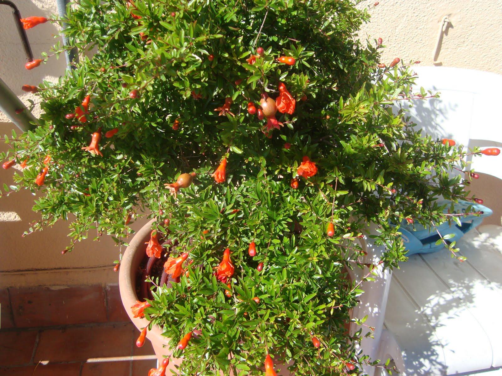 Mi jardin preferido julio 2010 for Jardines caseros bonitos