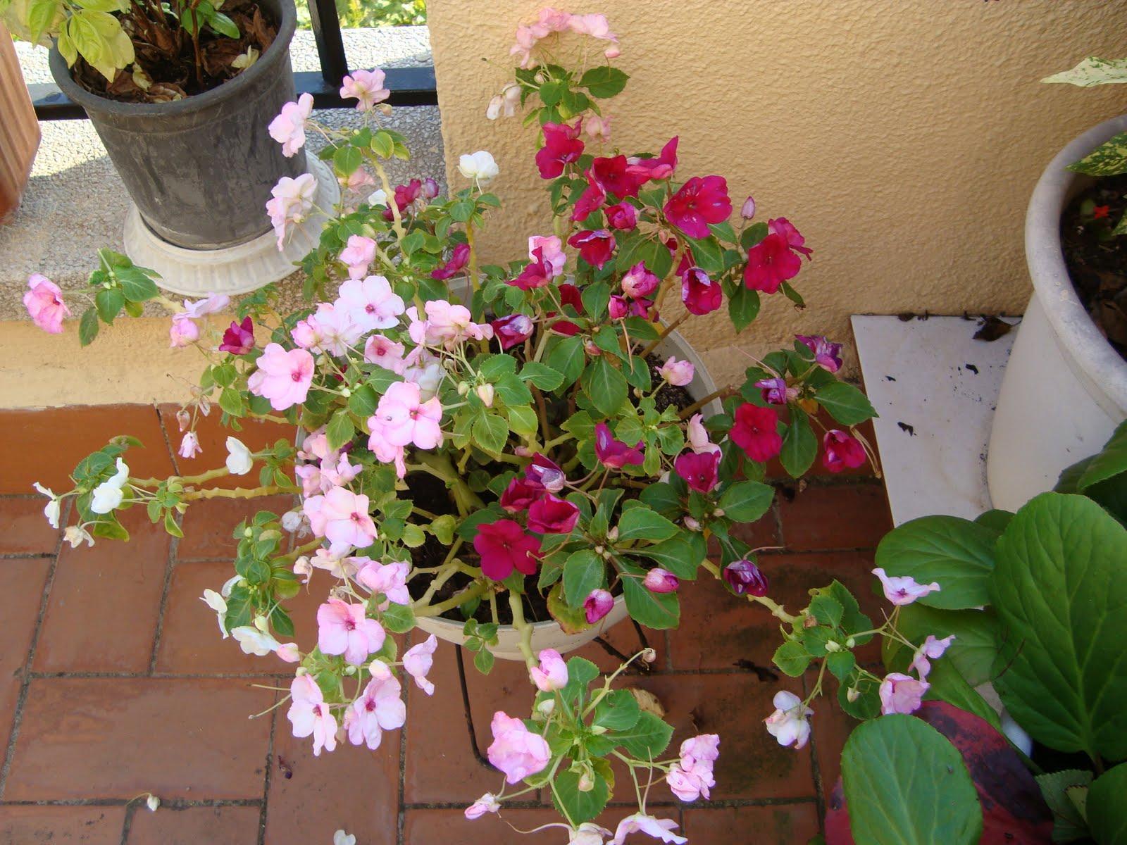 Mi jardin preferido - La casa de la alegria ...