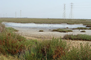 the real baylands