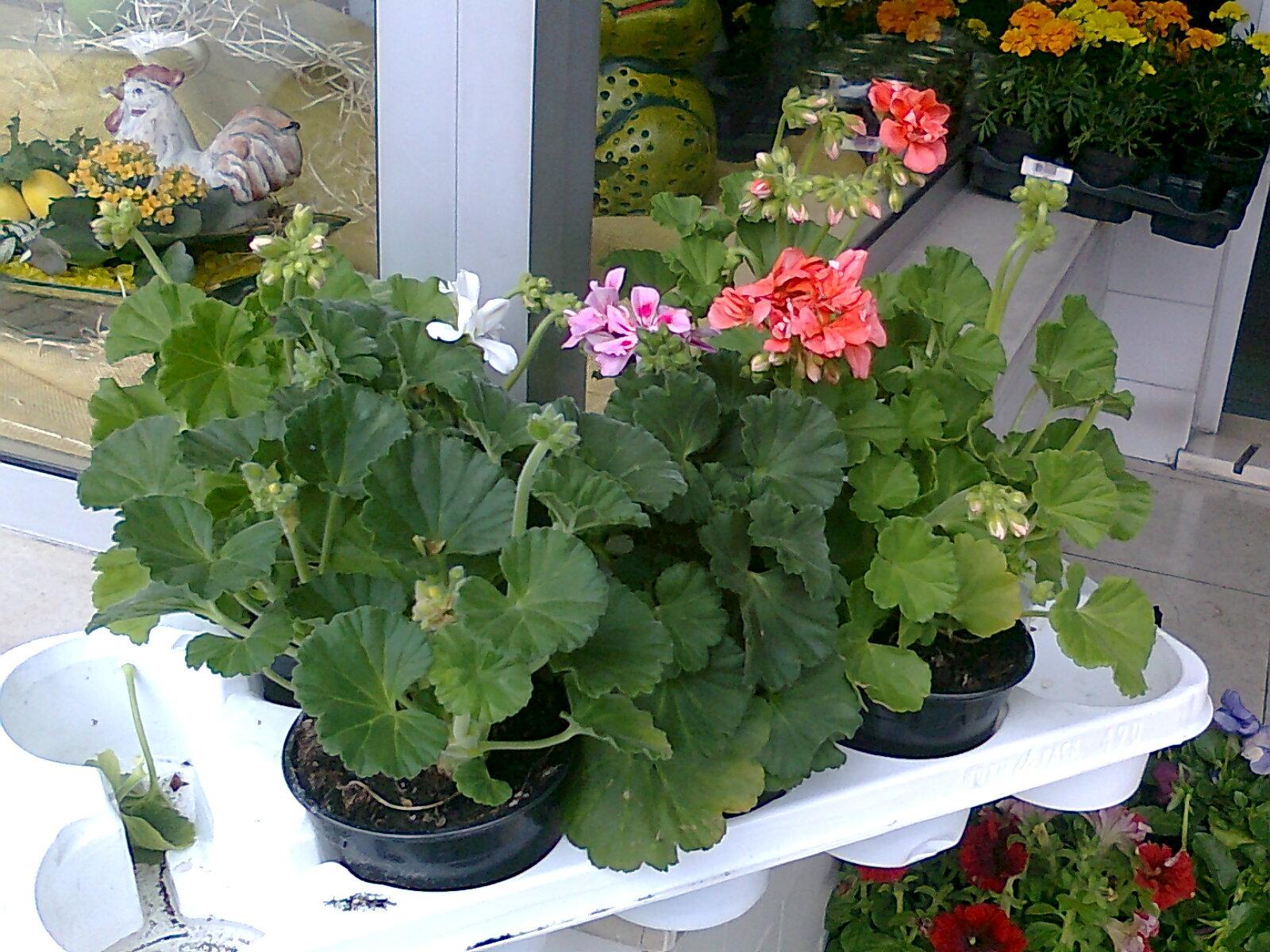 Florista cinoflor plantas de exterior for Plantas de exterior