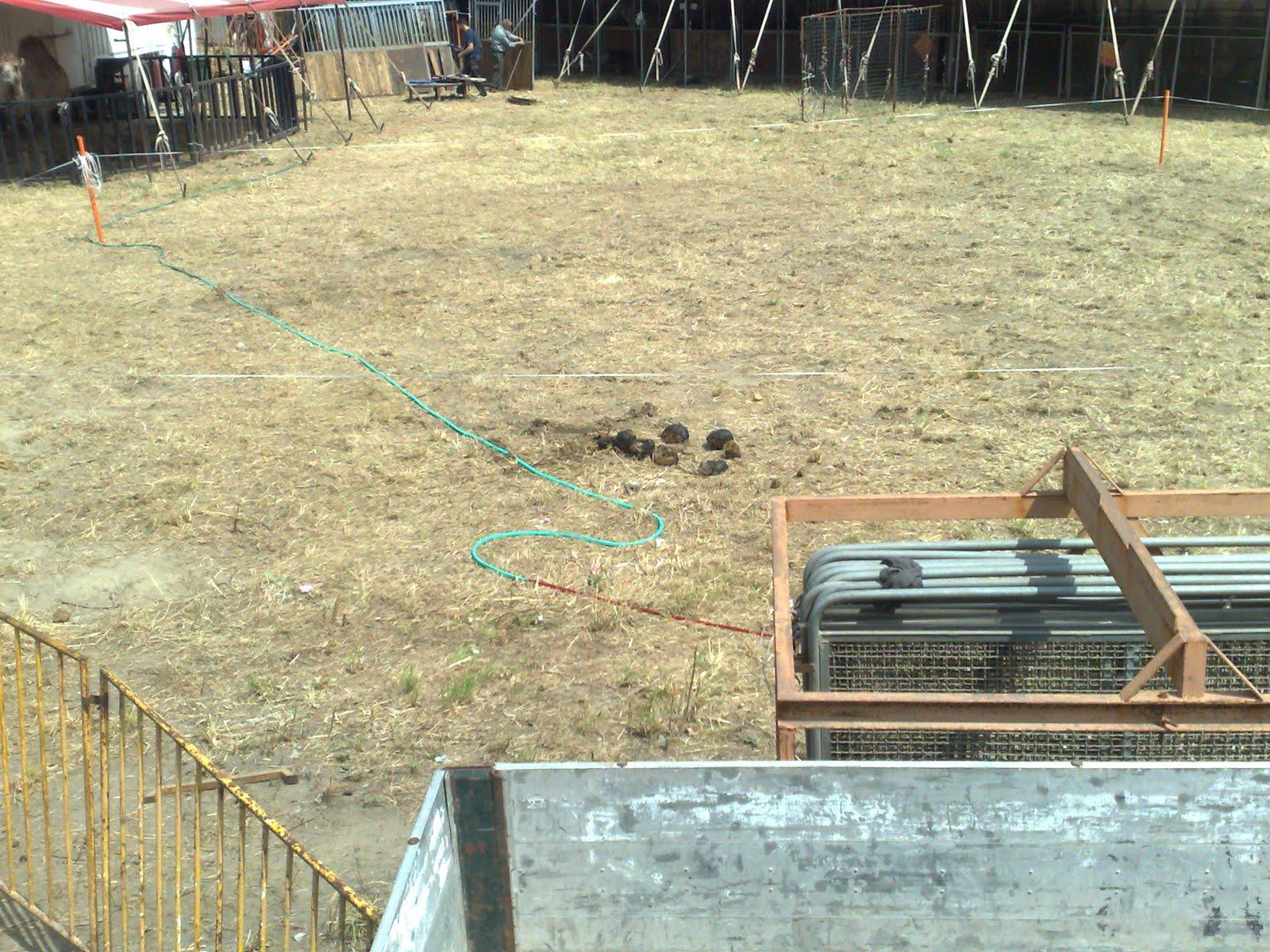 Spiazzale dove i grossi animali defecano provocando in alcune ore della giornata cattivi odori che investono tutta l area circostante