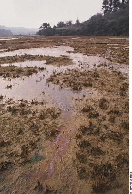 Two Amazing Wetlands: Carpenteria and Atchafalaya ...