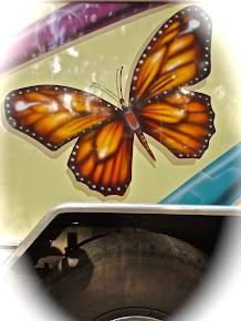 Un papillon sur un bus rodriguais
