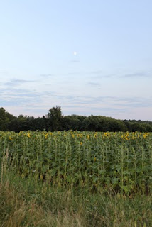 moon over sunflowers