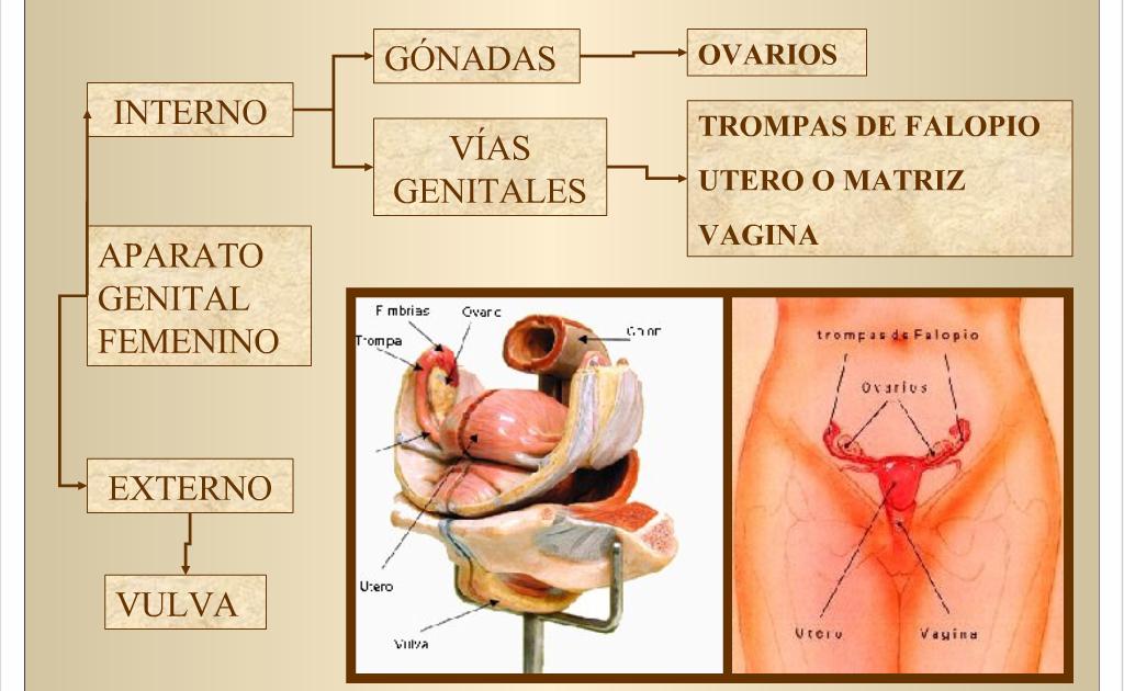 CATEDRA DE ANATOMIA Y FISIOLOGIA UNSA: ANATOMIA, FISIOLOGIA E ...