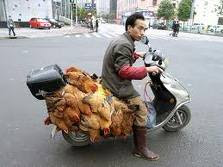 Crazy Picture of a Man with Lots of Hens