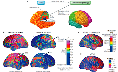 Genetic Convergence Between Cognition >> Information Processing Heritability Of Brain Structure