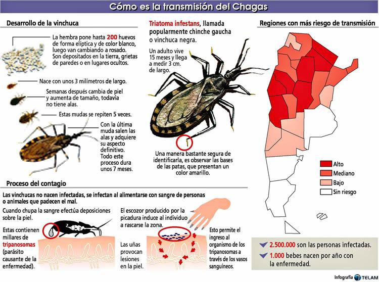 REVISTA D SALUD: ¿Qué es el Mal de Chagas?