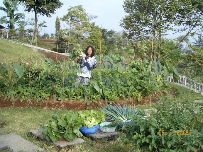 SEDAP ALAMI - Organic Farm n Resto