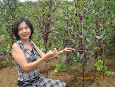 Kebun Sedap Alami di desa Sukagalih Mega Mendung Cisarua