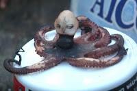 gurita aneh