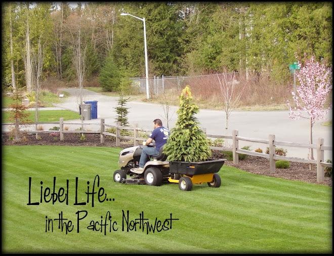 Liebel Life...