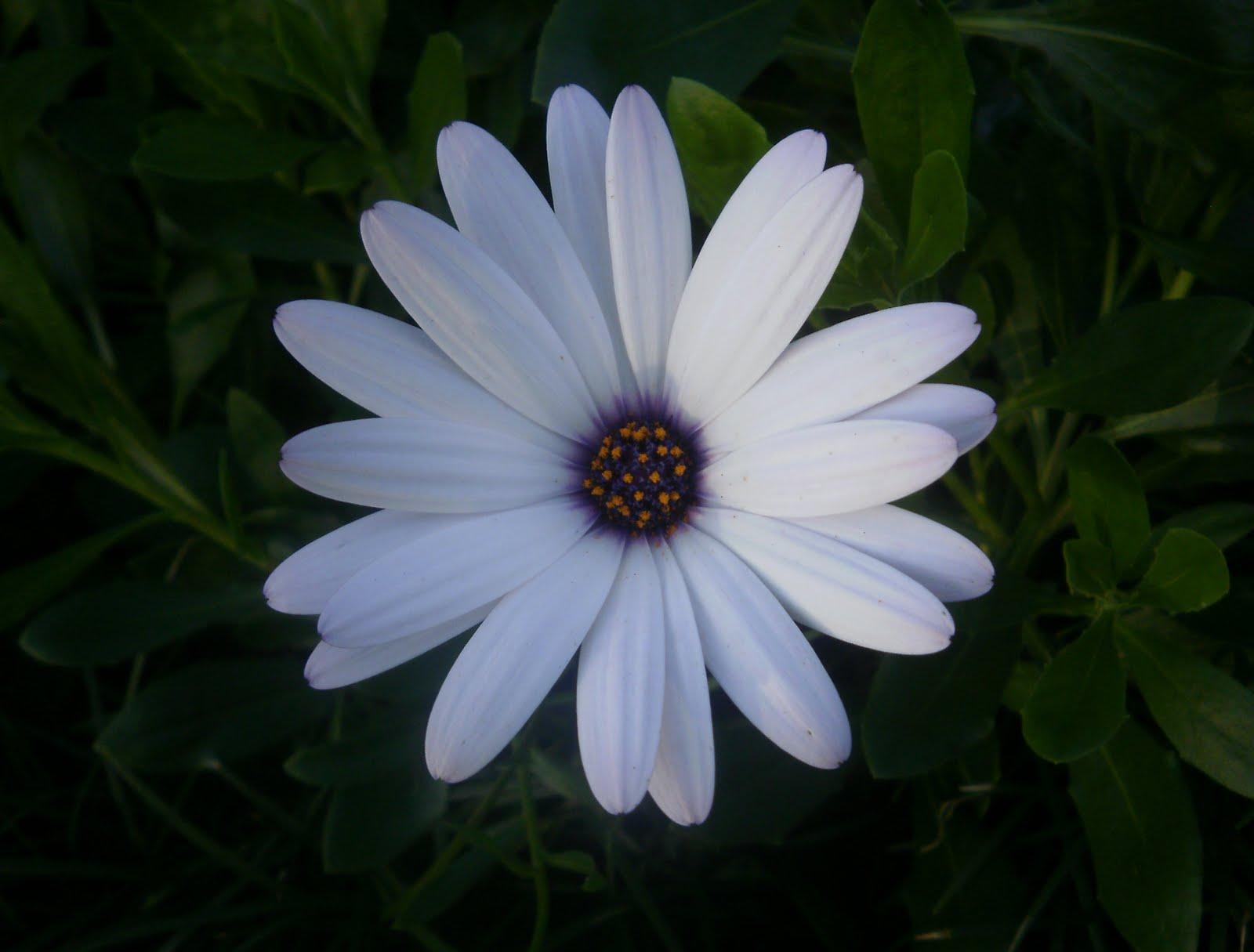 Amateur d 39 art flowers different colors and shapes for What makes flowers different colors