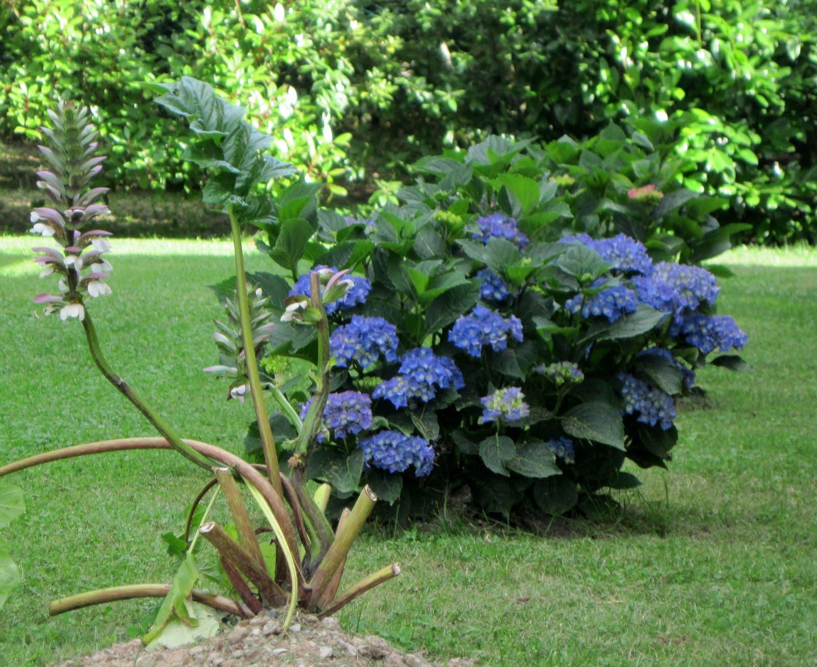 Il giardino sul lago colori di giugno for Ortensie in vaso