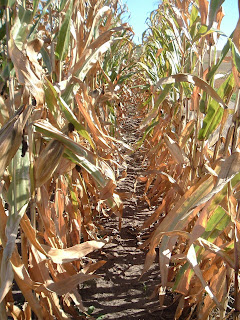 Corn from a Signs Alien Perspective