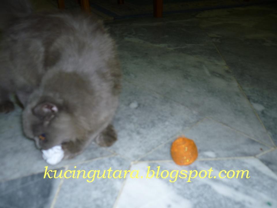 Kucing Utara Bola Mainan Kucing