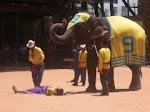Pertunjukan Gajah di Thailand