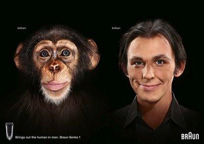 concurs fotografie, tema evolutie, poza braun