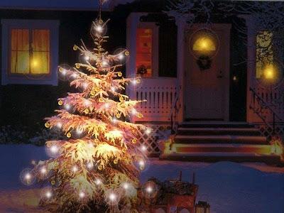 brad-frumos-iarna-poza