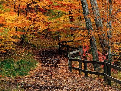peisaj,toamna,munti,padure fag,copaci,frunze,