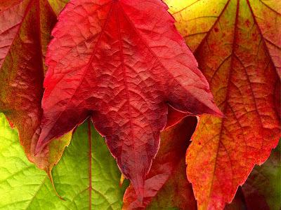 frunze toamna autumn