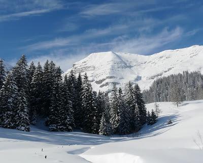 iarna zapada natura