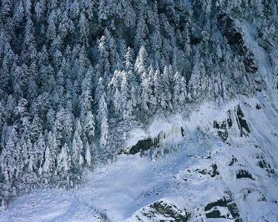 peisaje de iarna padure vacanta
