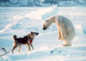polu nord sud animale blana gheata