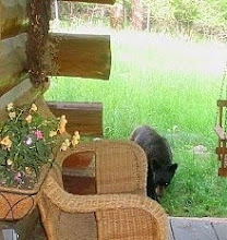 a young bear checking out our porch