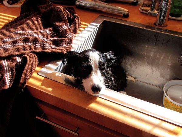 [wet+puppy.jpg]