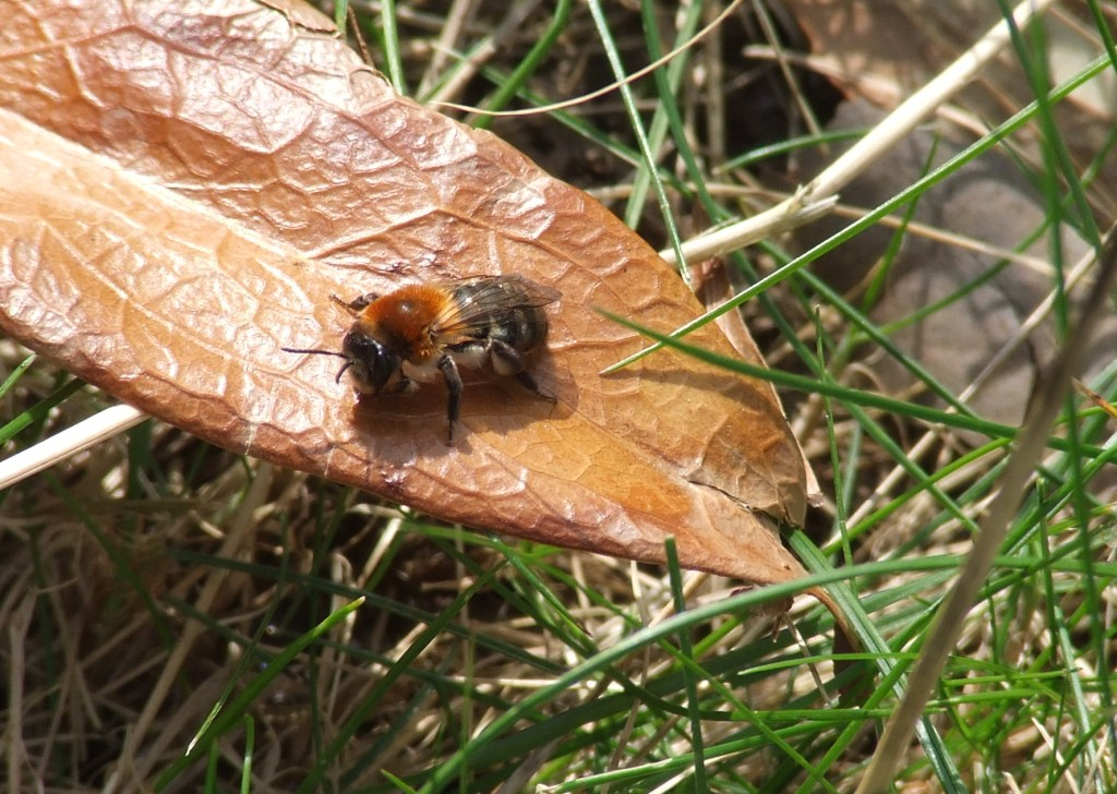 Bee eggs hatching - photo#6