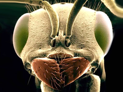 Ant Insect Desktop Wallpaper