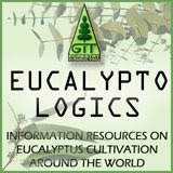 information and resources on Eucalyptus cultivation around the world