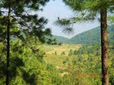 Exotic Pine Valley