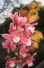 Bloom of Two Orchids