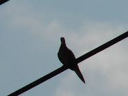 CHILLIN BIRDIE