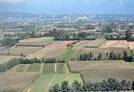 Vedelago landscape