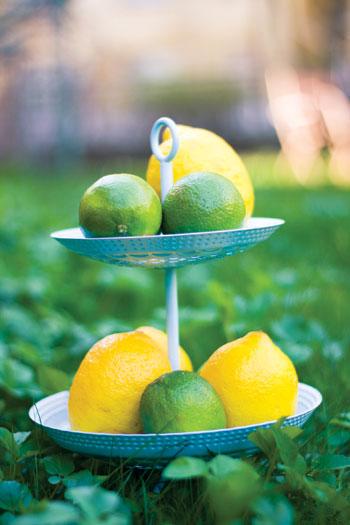[citrus.jpg]