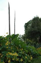 Trädgårdslänkar