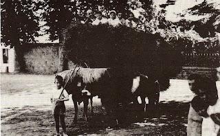 Miguel Delibes, segundo por la izquierda sobre el carro junto a su padre, con sus hermanos y primos, en Molledo (Valle de Iguña) en 1923 - Publicada por el Diario Montañés (13-03-2010)