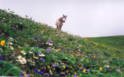 Roopkund Trek Ali bugyal Horse grazing
