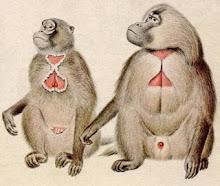 A Biology Class Picture of Geladas