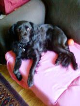 Mala the Dog