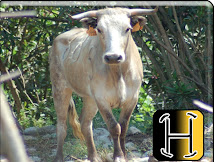 2010 fiestas de la muralla, vaca de aurelio hernando
