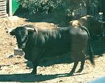 2005 fiestas patronales,aldeaqemada