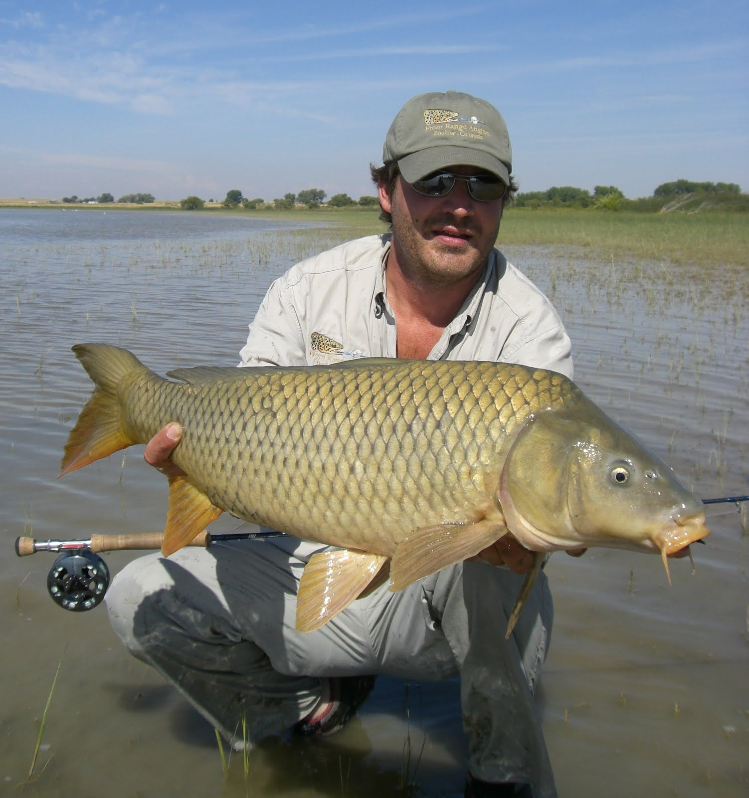 Colorado fly fishing reports the carp addiction for Fly fishing carp