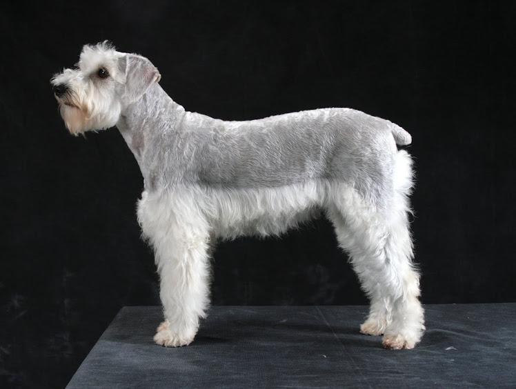 Essa é a minha cachorra Espuma