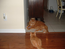 Connor and Cecil have Carter cornered