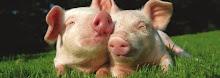 ή να τα αφήνουμε ελεύθερα, όπως το  θέλει η φύση τους???....
