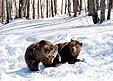 ΑΡΚΤΟΥΡΟΣ : Σύλλογος Προστασίας της Αρκούδας